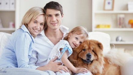 Wills & Trusts dog-young-family Direct Wills {NAME}